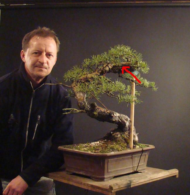 "Pinus sylvestris 2005 - ""Transformations "" Ohr_1010"