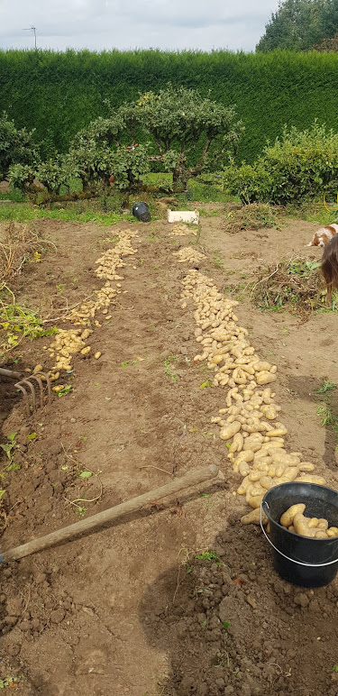 mon jardin en permaculture Amandi12