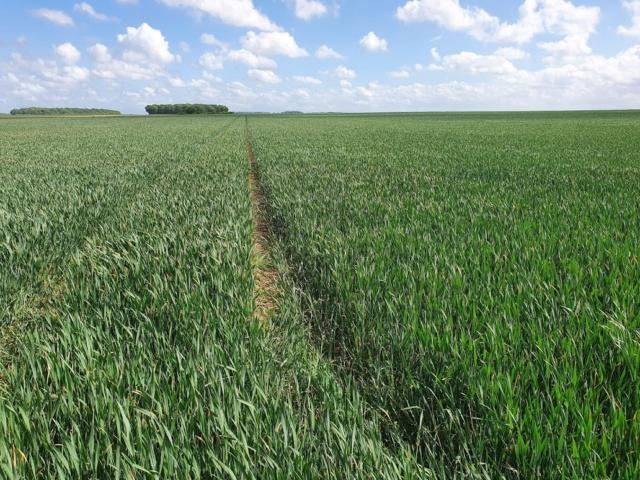 Suivi des blés 2020 - Page 6 Sailly10