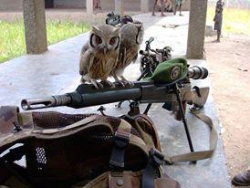 Se préparer à une guerre civile Sniper10