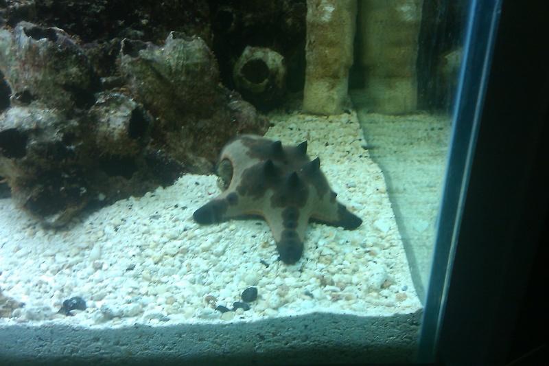 FS Salt water fish Saginaw Tx. Imag0013