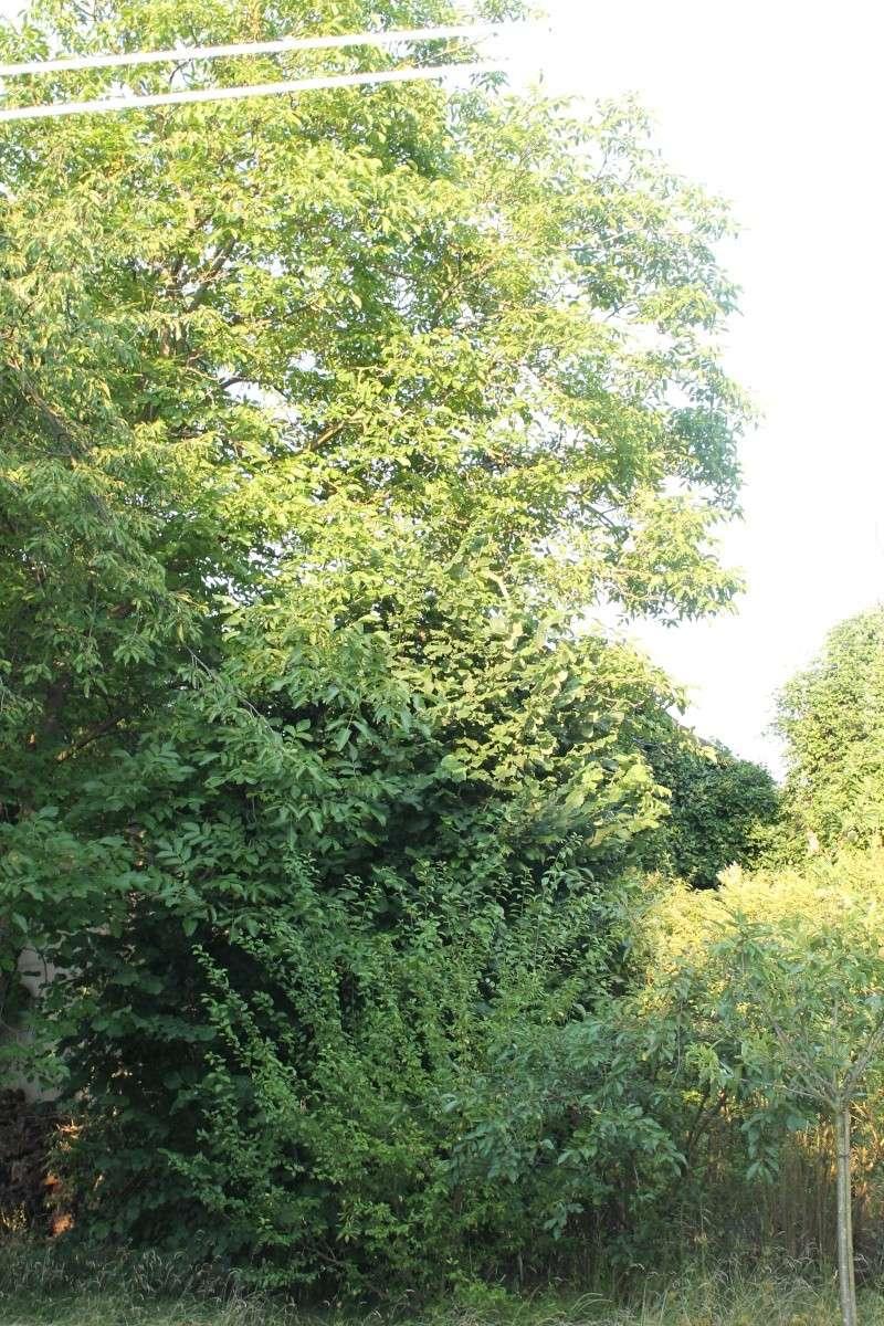 grand arbuste spontané Img_1128
