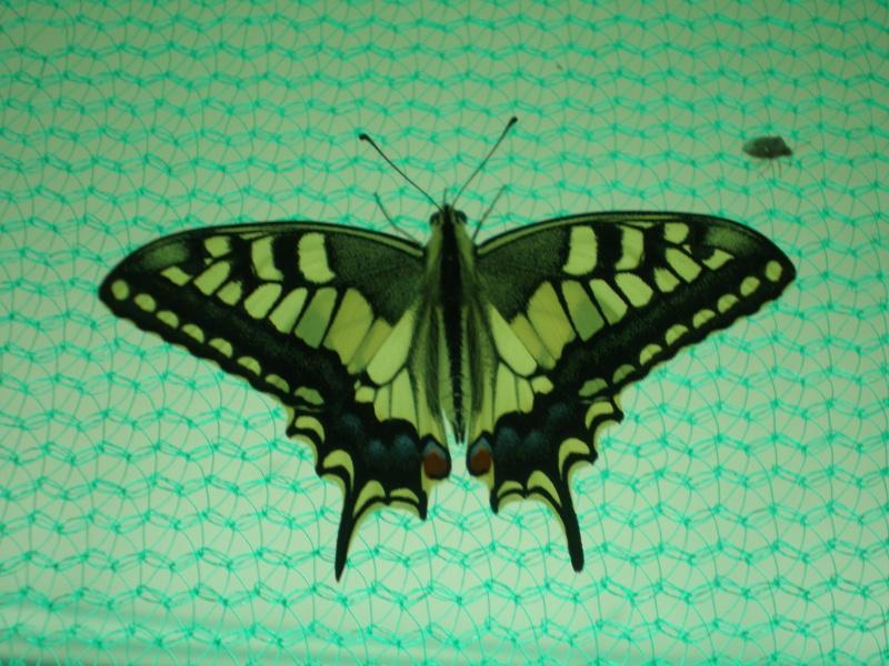 La serre à papillons Parc André Citroen P8110011