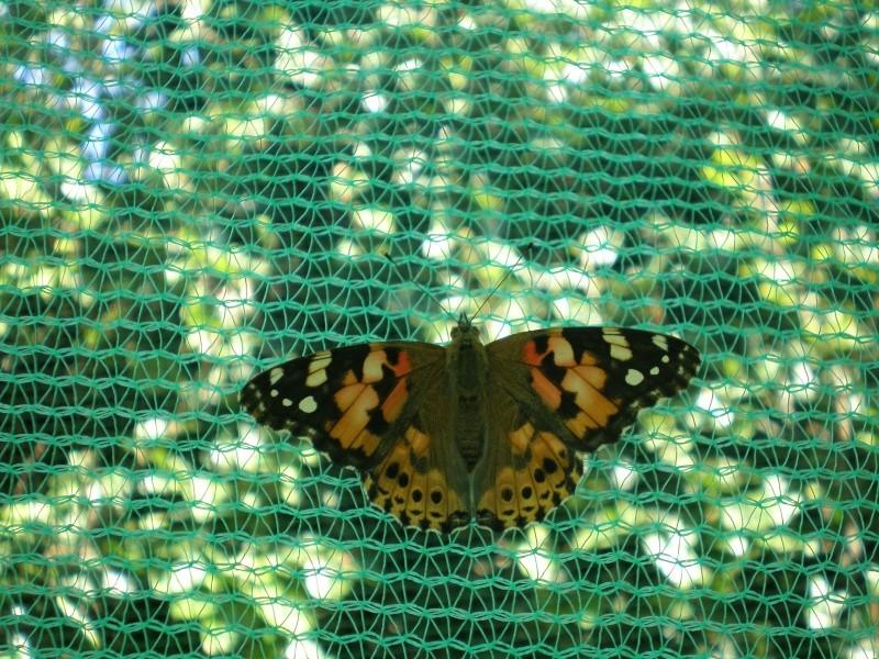 La serre à papillons Parc André Citroen P8110012