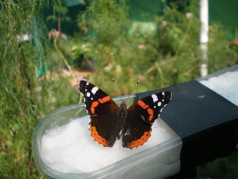 La serre à papillons Parc André Citroen P8110013