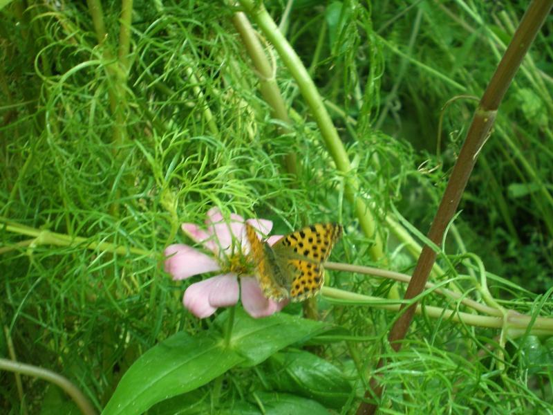 La serre à papillons Parc André Citroen P8110014