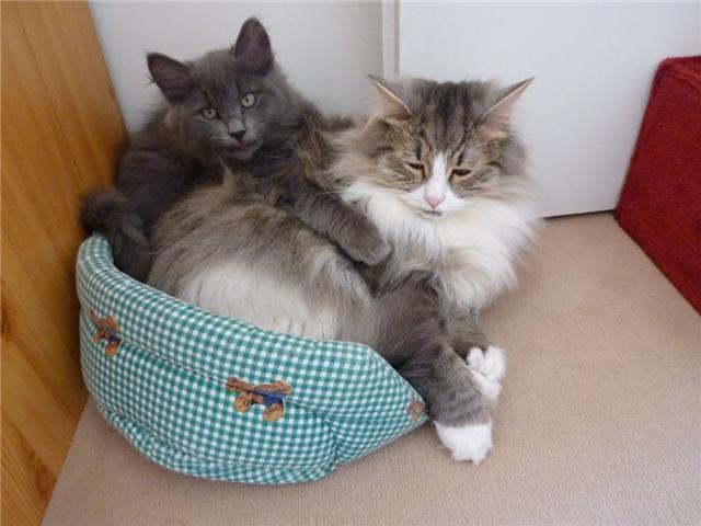 concours photos: le chat en groupe Calin_10