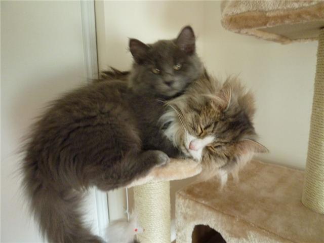 concours photos: le chat en groupe Getatt10