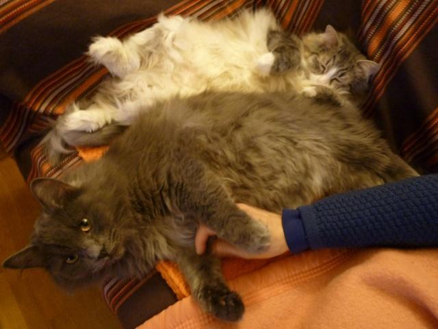 concours photos: le chat en groupe La_tal10