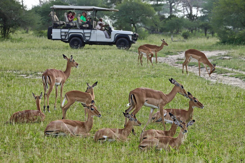 SAFARI Photo dans le sud de la TANZANIE.   FIN le 30 / 04/ 2020 . Img_3234