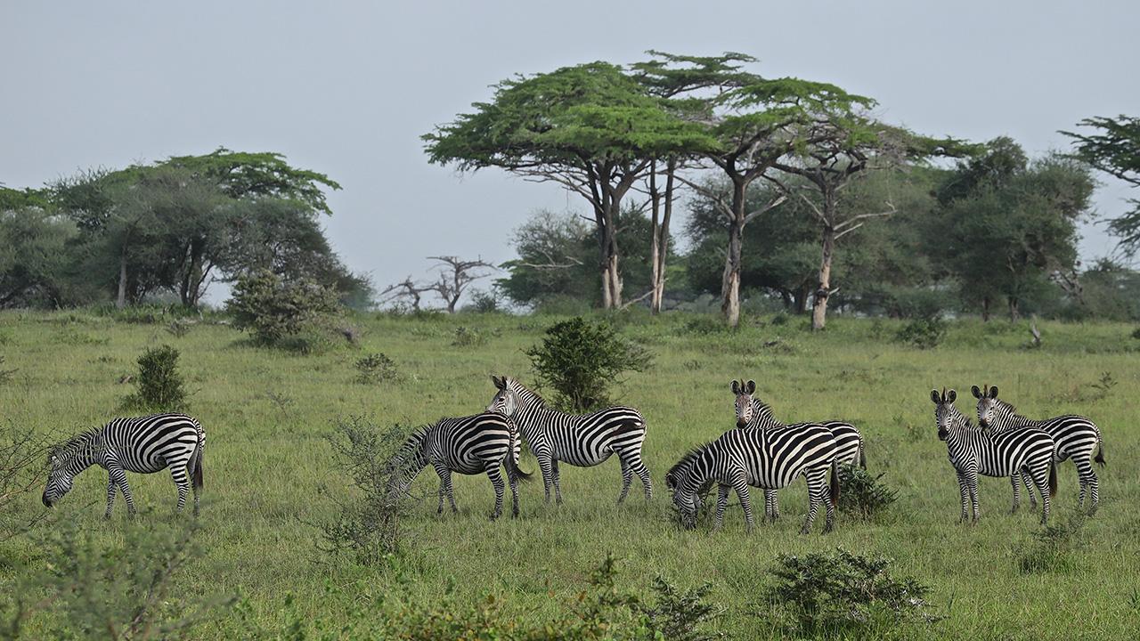 SAFARI Photo dans le sud de la TANZANIE.   FIN le 30 / 04/ 2020 . Img_3238