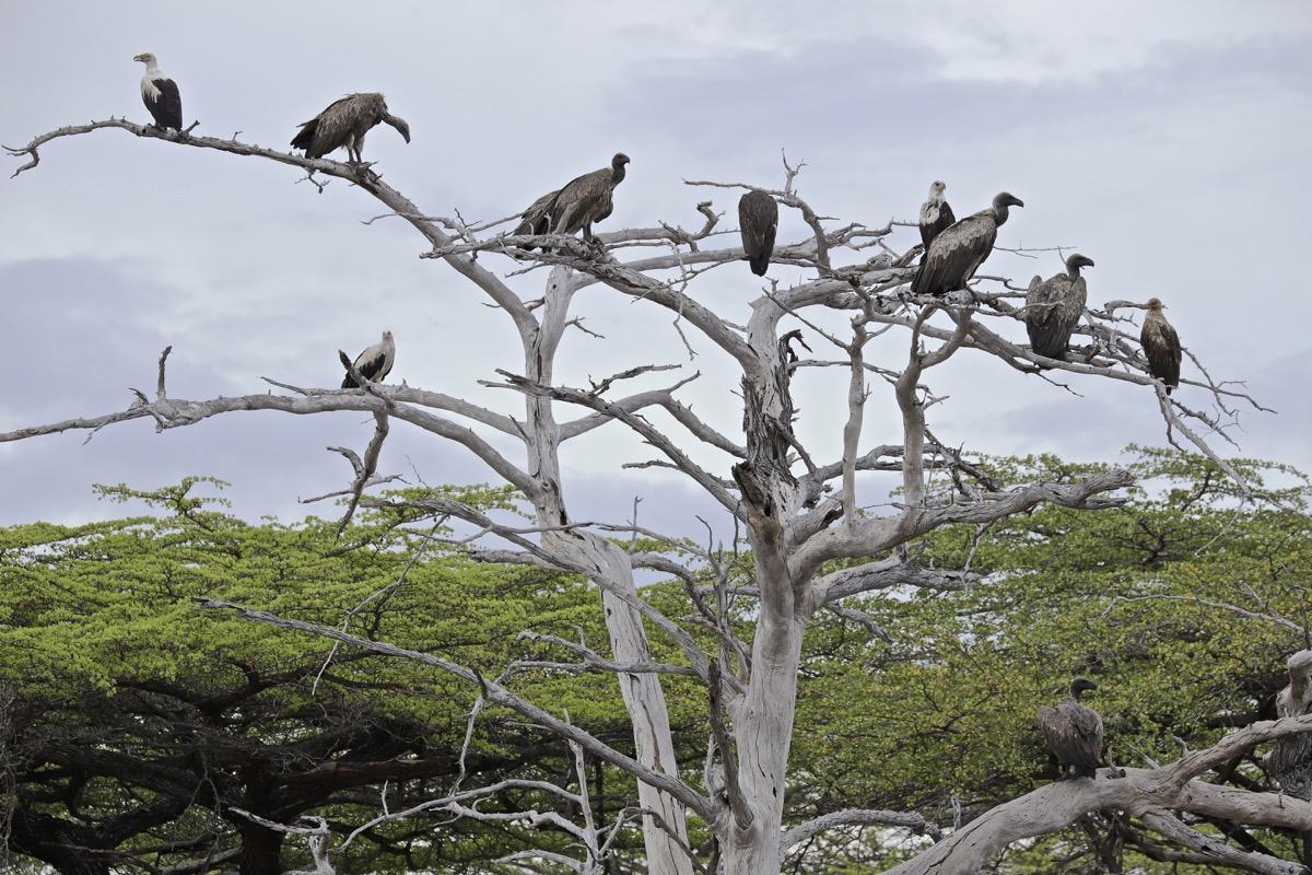 Vol au dessus de nids de ...Rolliers ... - Page 3 Img_9414