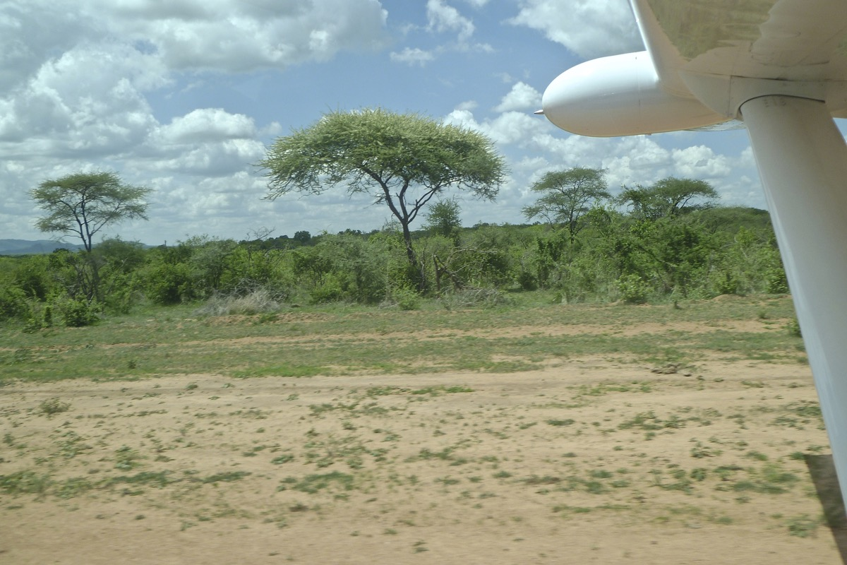 Vol au dessus de nids de ...Rolliers ... - Page 2 P1060026