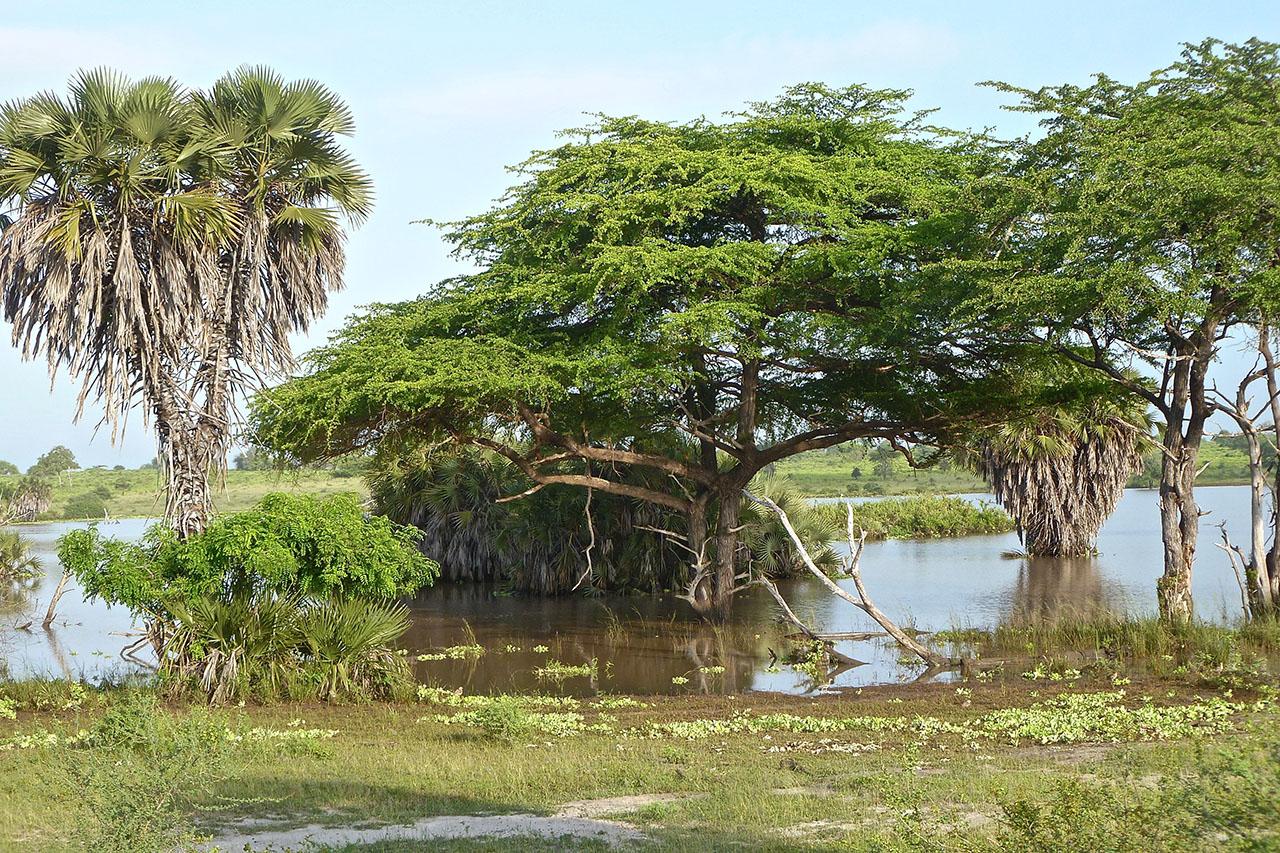 SAFARI Photo dans le sud de la TANZANIE.   FIN le 30 / 04/ 2020 . P1060723