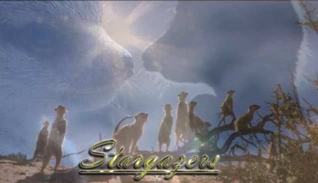 Stargazers Meerkat RP