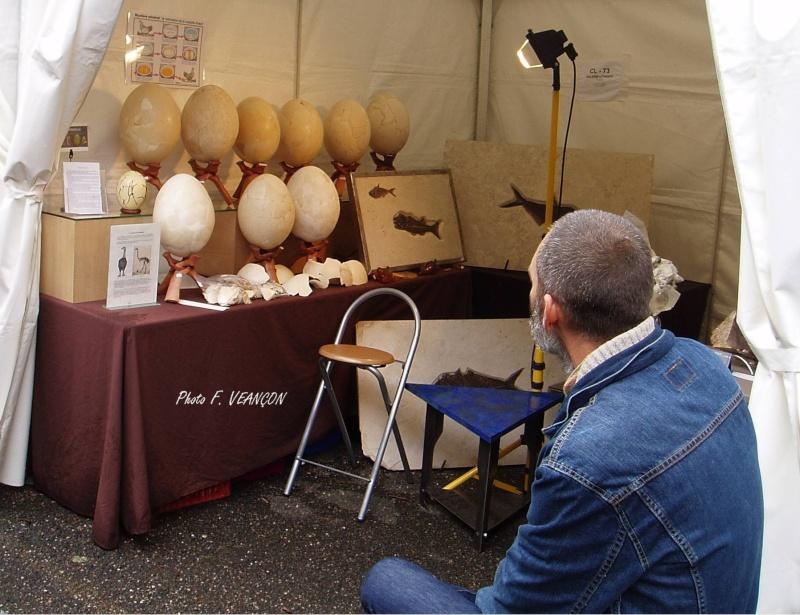 Sainte-Marie-aux-Mines 2013 : 50e anniversaire de la bourse minéralogique 5010