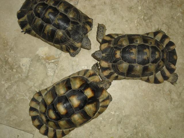 besoin de renseignement sur ces trois tortues svpp Dsc00010