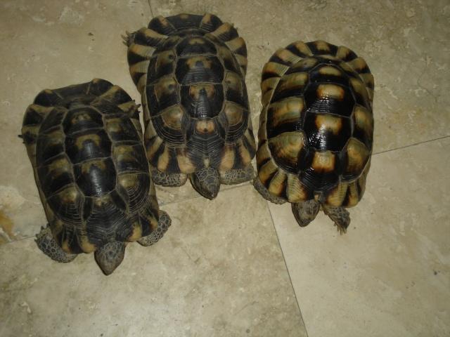 besoin de renseignement sur ces trois tortues svpp Dsc00011