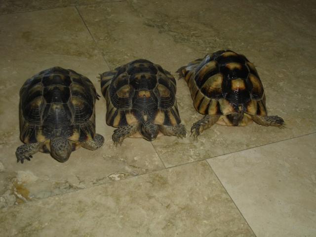besoin de renseignement sur ces trois tortues svpp Dsc00012