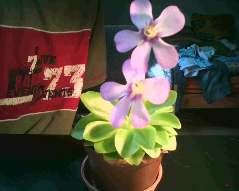 tina en fleur Image_10