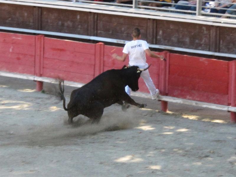 vergeze  Course de vaches cocardières – manade Blatière - Ricard   Img_5212