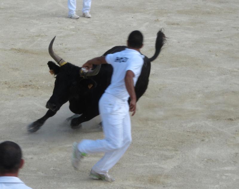 Concours de Manades bouillargues Img_6314