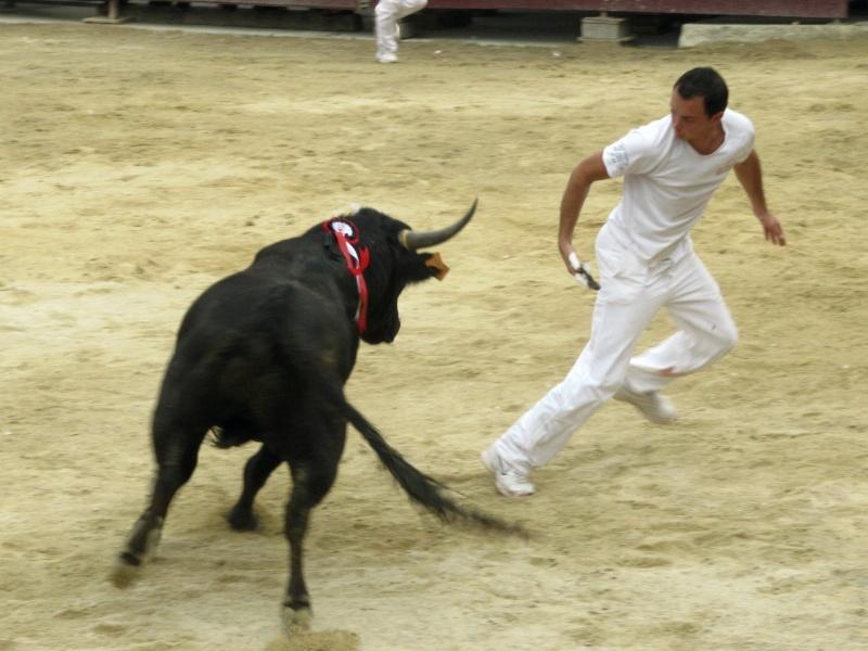 course de tau aubais 2010 Img_8312