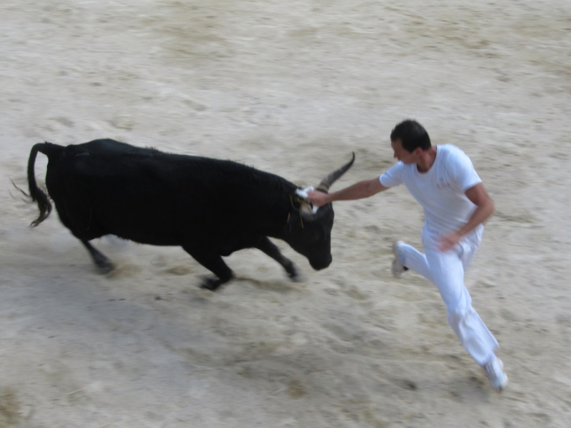 course de tau aubais 2010 Img_9310