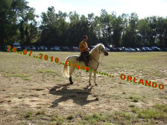 24...07...2010......  GAJAN........Bandide Dsc04913