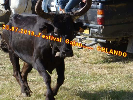 24...07...2010......  GAJAN........Bandide Dsc04915