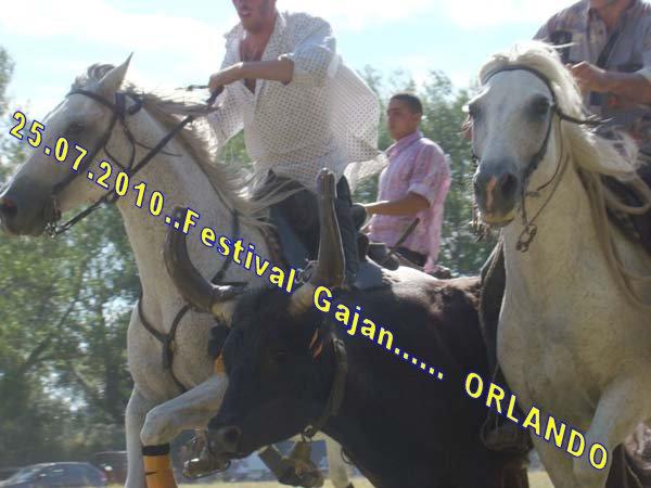 24...07...2010......  GAJAN........Bandide Dsc04916