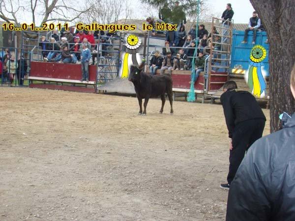 16..01..2011....Gallargues le Mtx Dsc07910