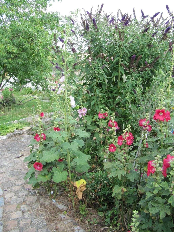 Jardin de tigrette Img_9815