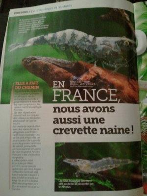 L'Aquarium Magazine - Nov-Déc 2012 (va vous intéresser !) 2012-116