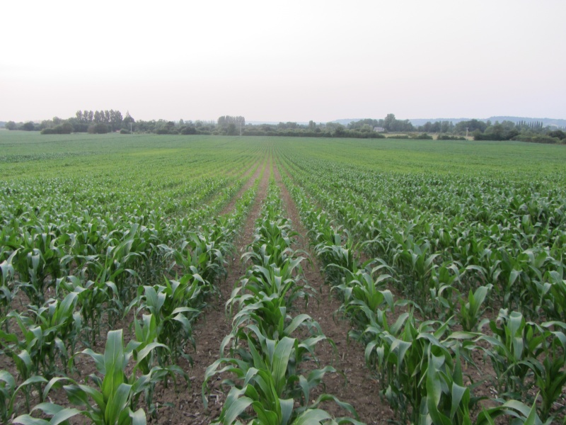 semis de maïs 2013  - Page 17 Img_0013