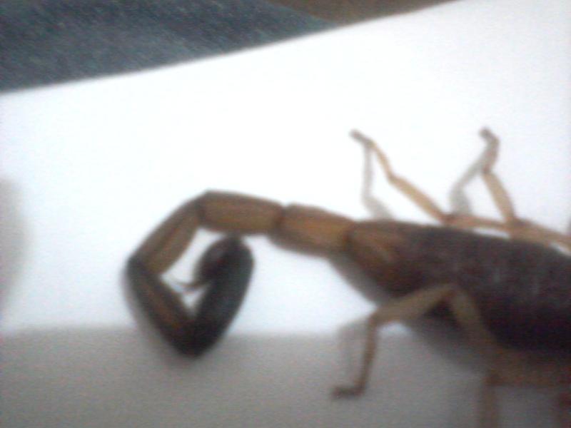 male or female? Photo-11