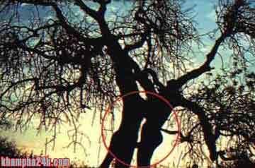 Ảnh nuy nghệ thuật- Đẹp mê hồn Tunhie10