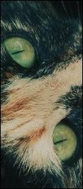 Etoile d'Hibiscus