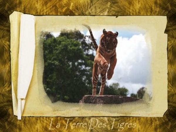 la terre des tigres