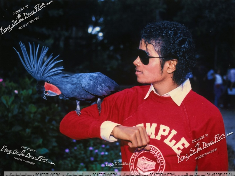 Collection MJ-Story : Michael et les animaux ^^ - Page 8 D6814610