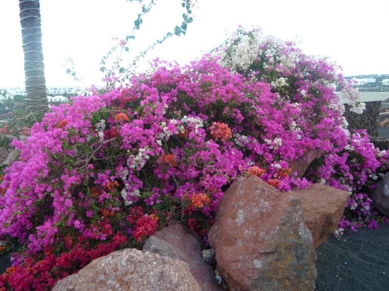 Canary Islands, Lanzarote, Puerto de Carmen, Playa Blanca 18810