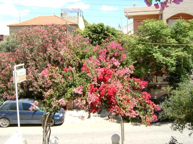 Greece, Island of Crete, Paleochora, 2005 Dscf0137