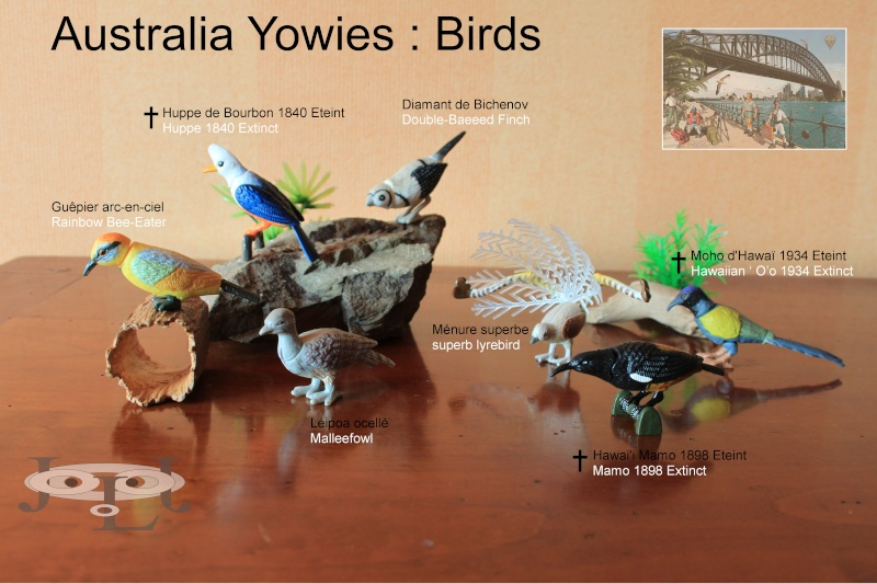 My collection Australian Yowies - Page 2 New_an30