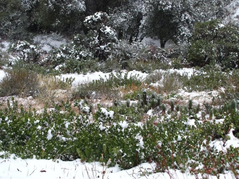 Зима!!!!Снежная  сказка! - Страница 2 Img_7426