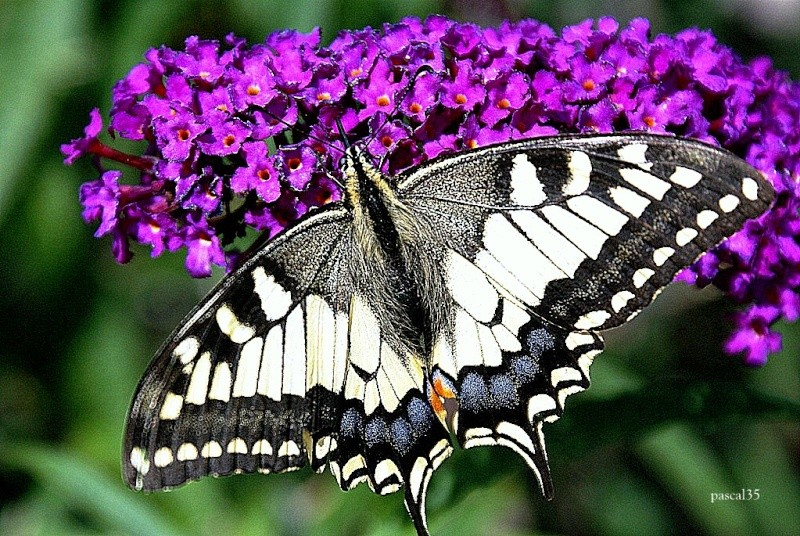 Papillon ouvert Dsc02910