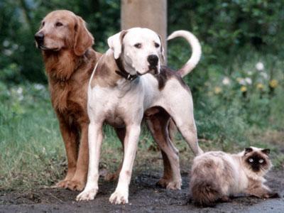 Quel sont vos films préférés avec des chiens ? L_incr10