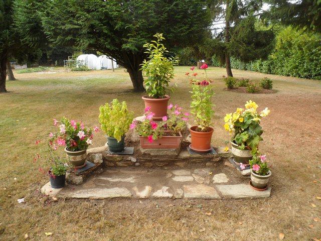 Fleurs d'extérieur - Page 3 2012_910