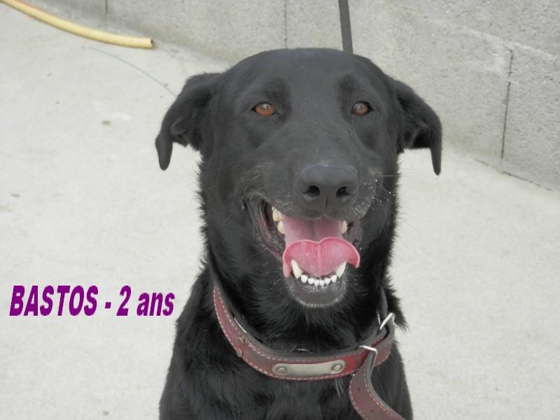 BASTOS - Mâle X Labrador noir - 2 ans - GALIA Bastos11