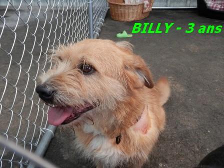 BILLY - mâle type Griffon - 3 ans  - GALIA (85) Billy_10