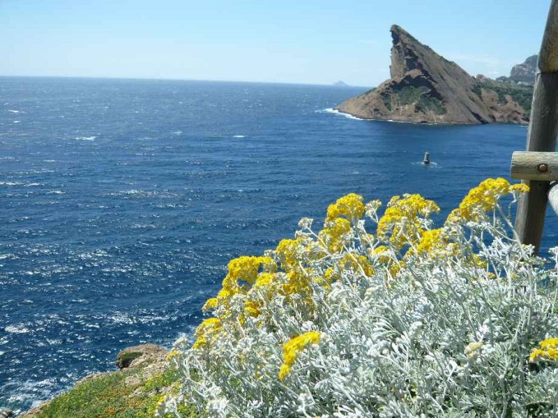 Penstemon, gaura, cinéraire maritime... 5_juin10
